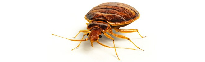 Bed Bug Bully Reviews >> Best Bed Bug Products for July 2018 - Bed Bug Product Reviews