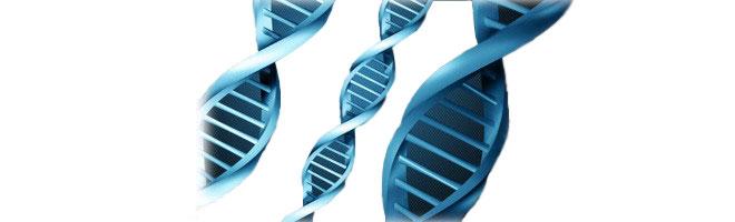 Best DNA Testing