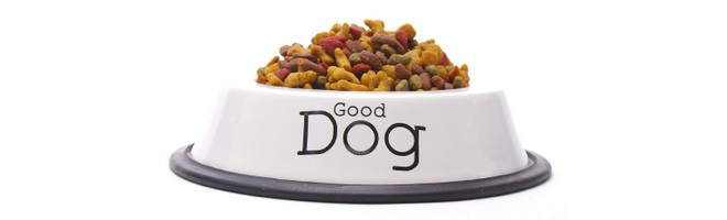 Best Dog Food Stores