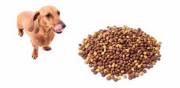 Best Dog Treat Clubs