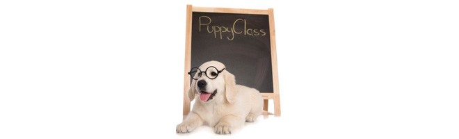 Best Dog Training Programs