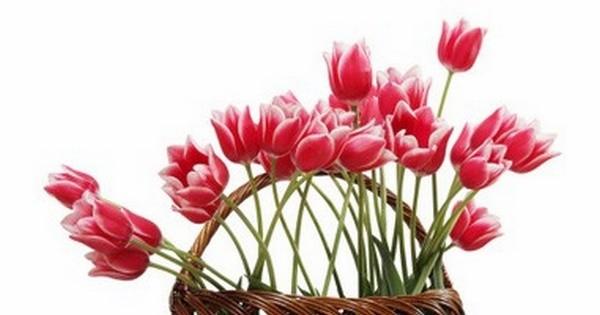 Best Flower Clubs