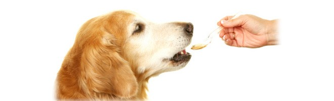 Best Pet Meds
