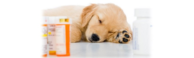 BBB Business Profile | Sierra Pet Meds USA | Reviews and ...