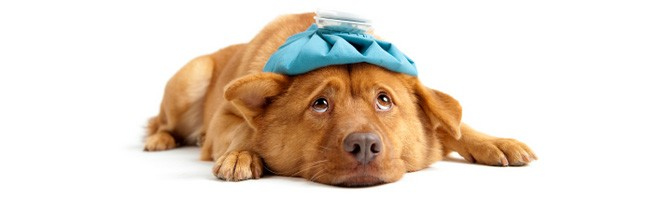 Pet Med Center in Ohio | Company Information & Reviews